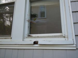 Rotten windows in need of replacement.